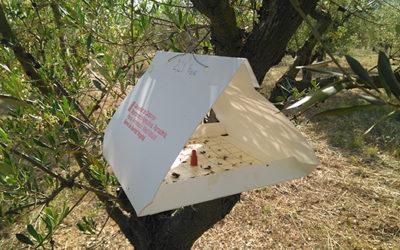 Control de les dues principals plagues de l'olivera
